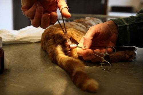 Кастрация котов возраст уход минусы альтернативы