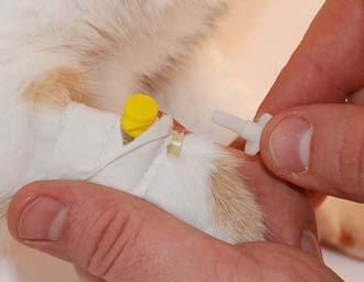 Анализы крови у животных в Перми